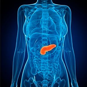Organs are our friends: The Pancreas